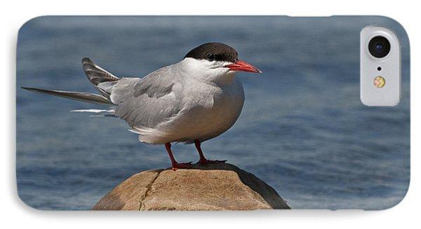 Common Tern... IPhone Case
