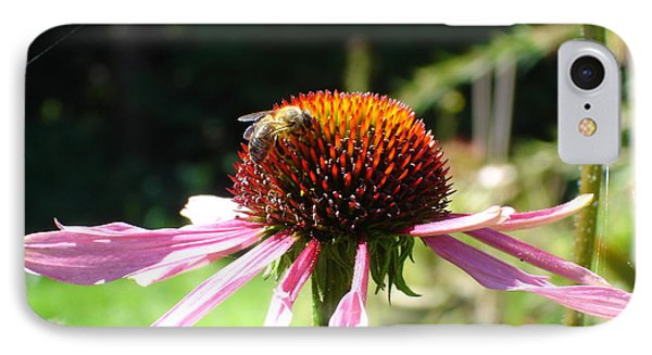 Cone Flower And Honey Bee IPhone Case