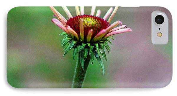 Coneflower Bloom IPhone Case