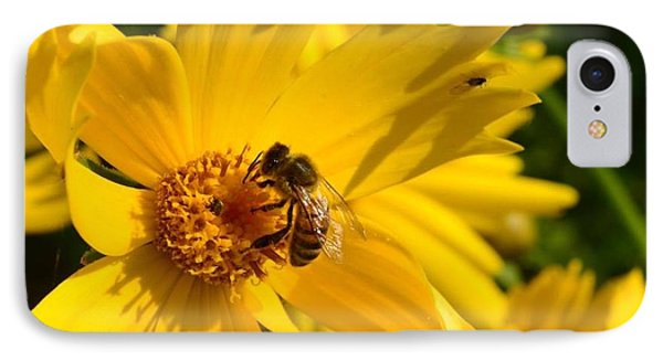 Coreopsis Beauty And The  Bee. IPhone Case