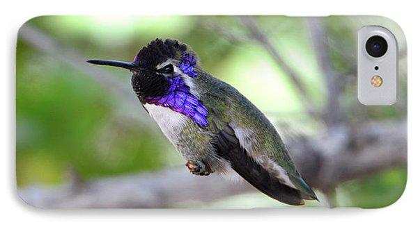 Costa's Hummingbird IPhone Case