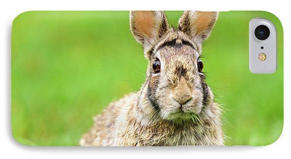 Cottontail Rabbit IPhone Case