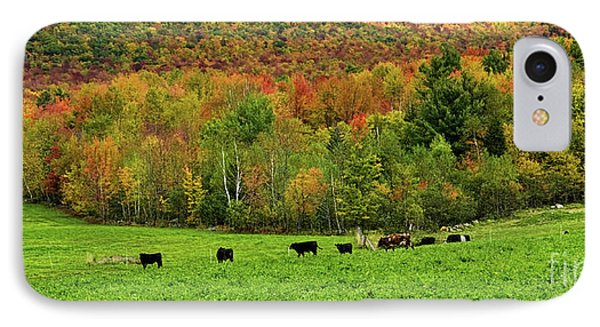 Cow Pasture In Fall IPhone Case