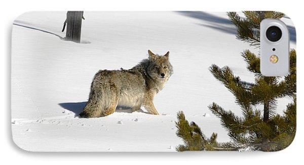 Coyote In Winter IPhone Case