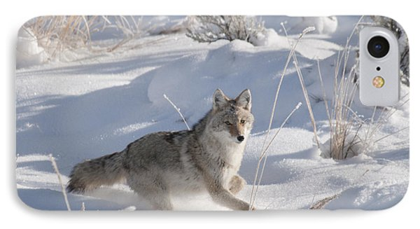 Coyote On The Move IPhone Case