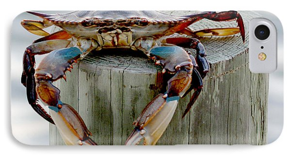 Crab Hanging Out IPhone Case
