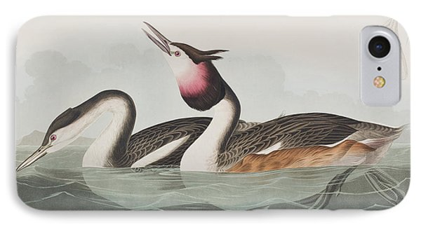 Crested Grebe IPhone Case