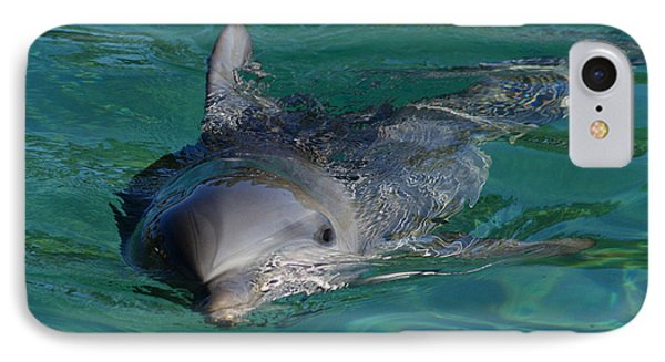 Curious Dolphin IPhone Case