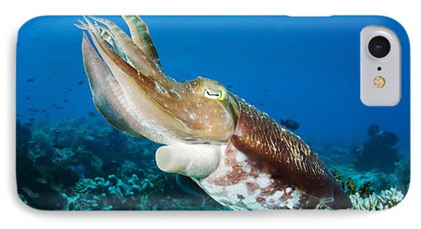 Cuttlefish IPhone Case