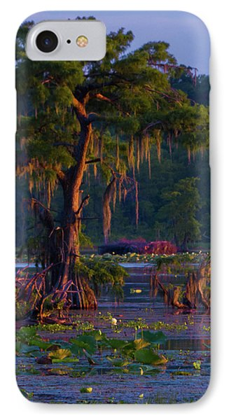 Cypress In The Sunset IPhone Case