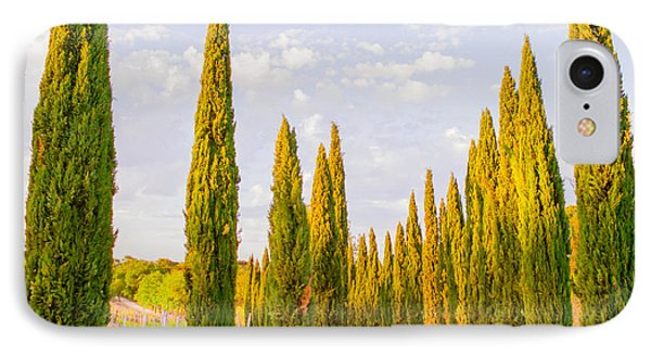 Cypress Trees In Tuscany IPhone Case