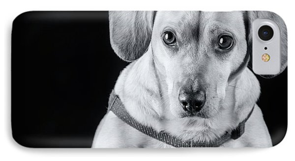 Dachshund Lab Mix IPhone Case