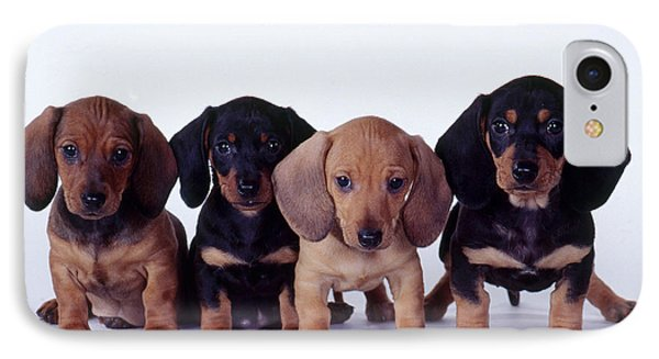 Dachshund Puppies  IPhone Case