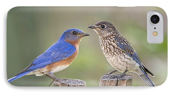 Daddy Bluebird And Juvenile IPhone Case