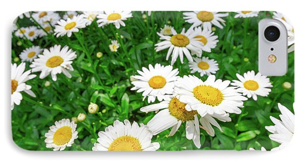 Daisy Garden IPhone Case
