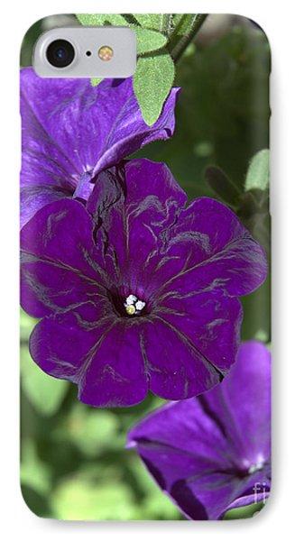 Dark Purple Petunias IPhone Case