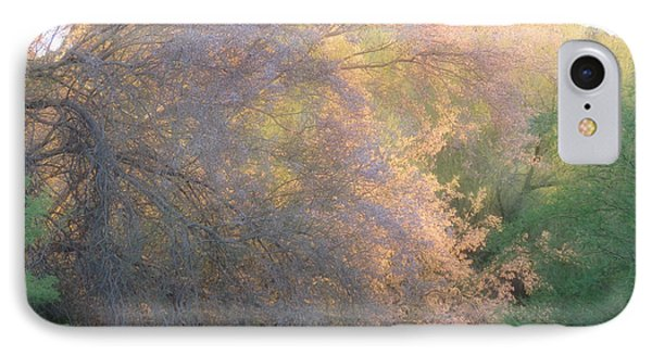 Desert Ironwood Blooming In The Golden Hour IPhone Case