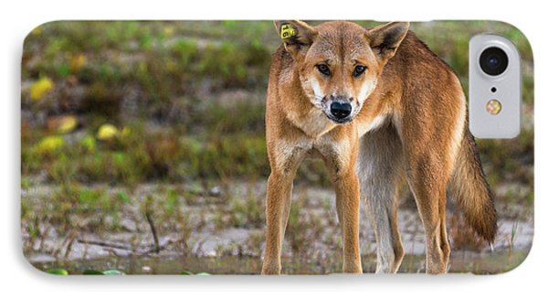 Dingo On 75 Mile Beach, IPhone Case