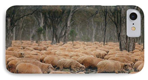 Droving Sheep  At Albert Australia IPhone Case