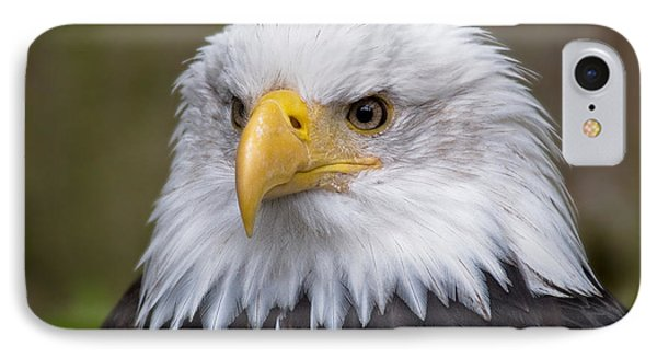 Eagle In Ketchikan Alaska IPhone Case