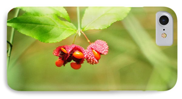 Euonymus Americanus  American Strawberry Bush IPhone Case
