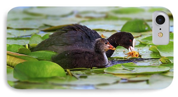 Eurasian Or Common Coot, Fulicula Atra, Duck And Duckling IPhone Case