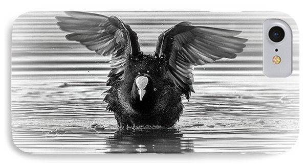 Eurasian Or Common Coot, Fulicula Atra, Duck IPhone Case