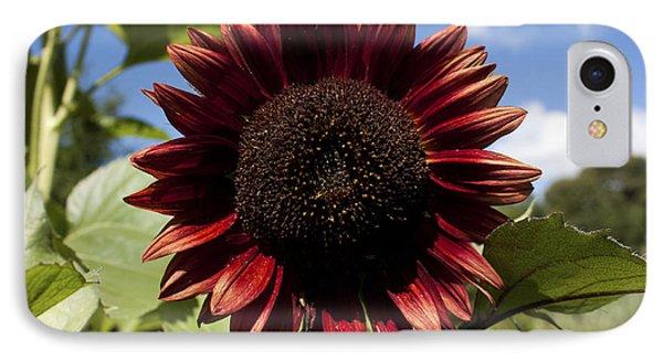Evening Sun Sunflower #2 IPhone Case