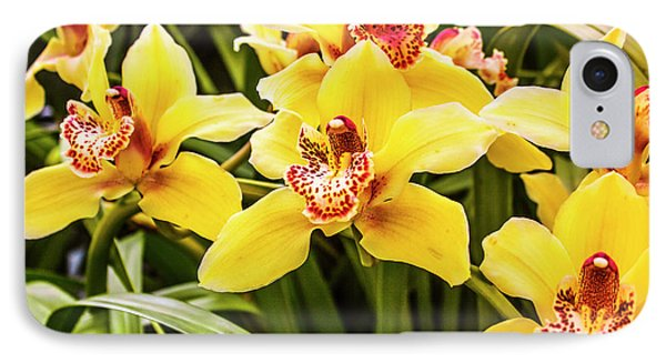 Orchid iPhone 8 Case - Exotic Orchids  by Jorgo Photography - Wall Art Gallery