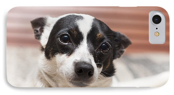 Face Of A Cute Terrier Puppy Dog Thinking IPhone Case