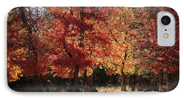 IPhone Case featuring the photograph Fall Forest Magic  by Saija Lehtonen