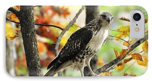 Fall Red-tailed Hawk IPhone Case