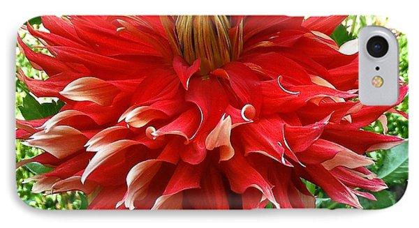 Fancy Red Dahlia IPhone Case