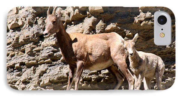 Female Bighorn Sheep With Juvenile IPhone Case
