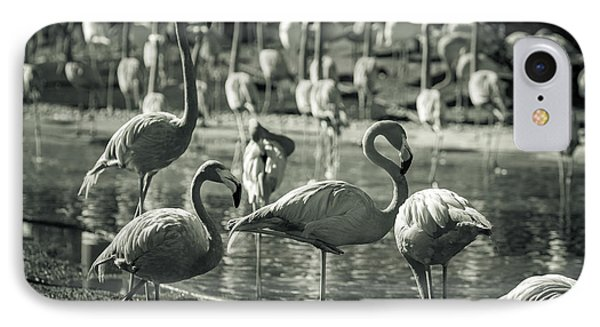 Flamboyance Of Flamingos IPhone Case