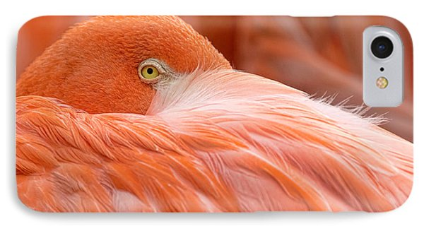 Flamboyant Flamingo IPhone Case