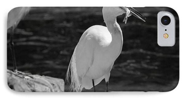 Florida White Egret IPhone Case