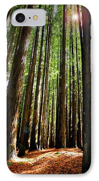 Forest Glade IPhone Case