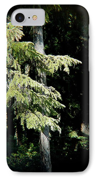 Forest Sunlight - 1 IPhone Case