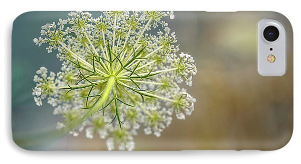 Fragile Dill Umbels On Summer Meadow IPhone Case