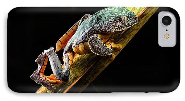 Fringe Tree Frog - Amazon Rain Forest IPhone Case