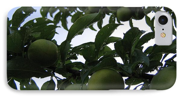 Fruit And Sky_raindrops IPhone Case