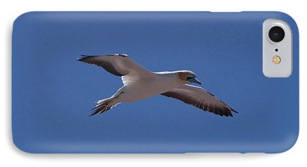 Gannet #1 IPhone Case