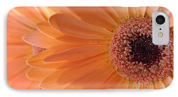 Gerbera Daisy IPhone Case