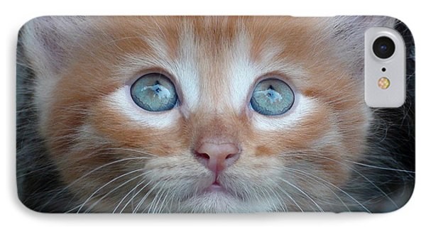Ginger Kitten With Blue Eyes IPhone Case