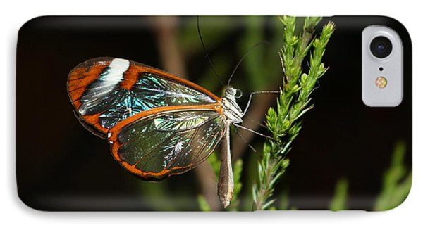 Glasswinged Butterfly IPhone Case