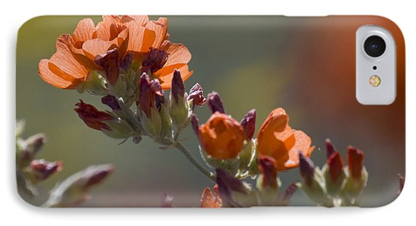 Globe Mallow Bloom IPhone Case