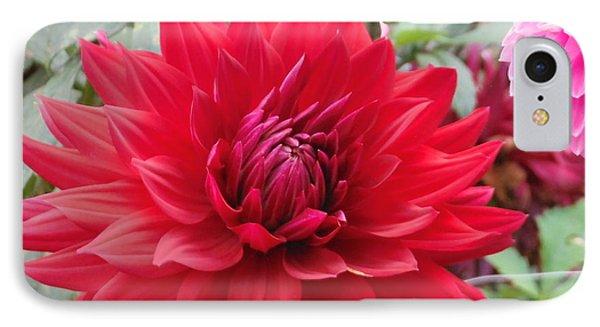 Glory Crimson Dahlia  IPhone Case