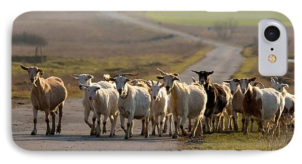Goats Walking Home IPhone Case
