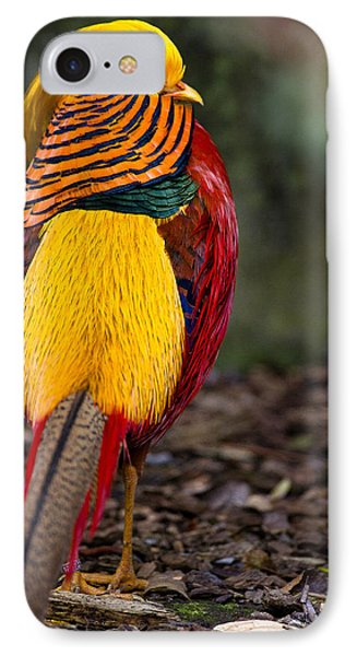 Golden Pheasant IPhone Case